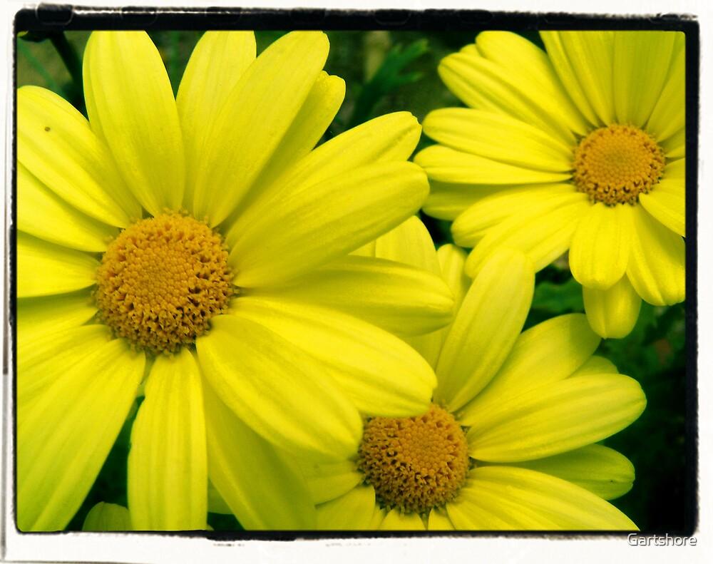 flowers2 by Gartshore
