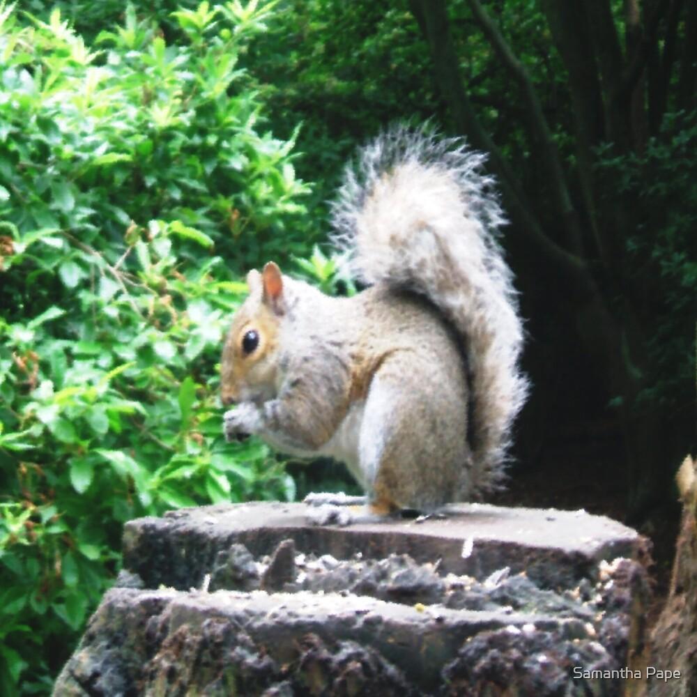 Squirrel by Samantha Pape