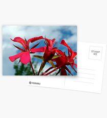 Flower power landscapephotocomp   Postcards