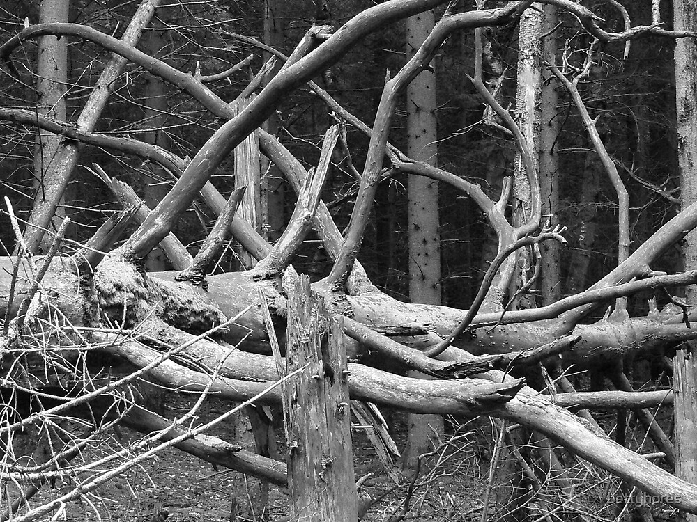 Dead wood lives  by bettyhores