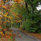 Jardinga  in Autumn by ienemien