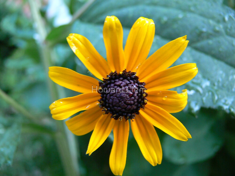 Yellow Flower by Howard Clem