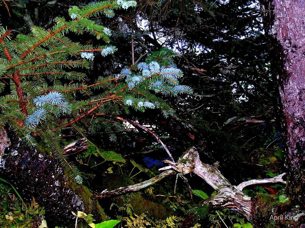 Close up wood Alaska by April King