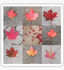 Canadian maples Sticker