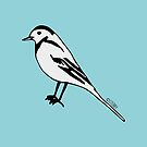 Pied Wagtail - Bird Illustration by Hannah Sterry