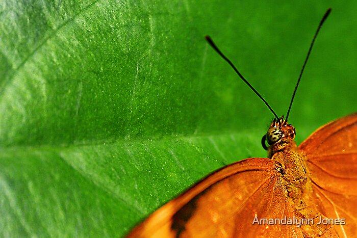 Butterfly by Amandalynn Jones