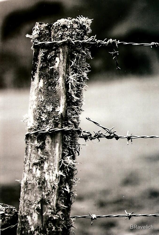 fencepost by BRavelich