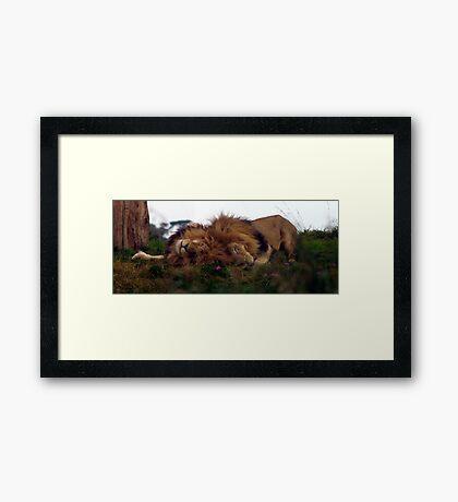 Sleeping Kings Framed Art Print