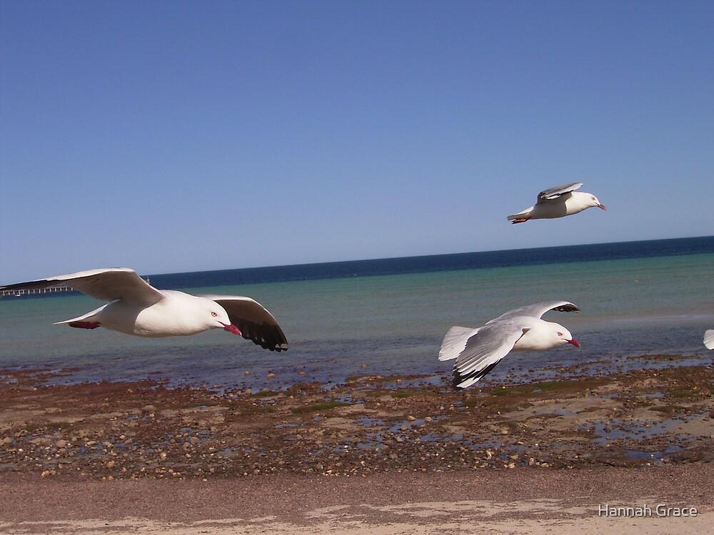 Sea Gulls by Hannah Grace