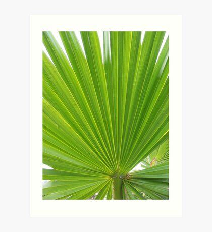hawkesbury river palm Art Print