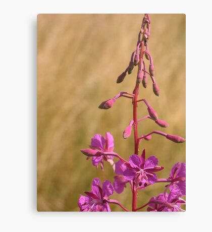 Purple meadow flower Canvas Print