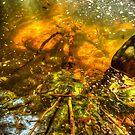 Sunlit Mountain Pond by Michael Matthews