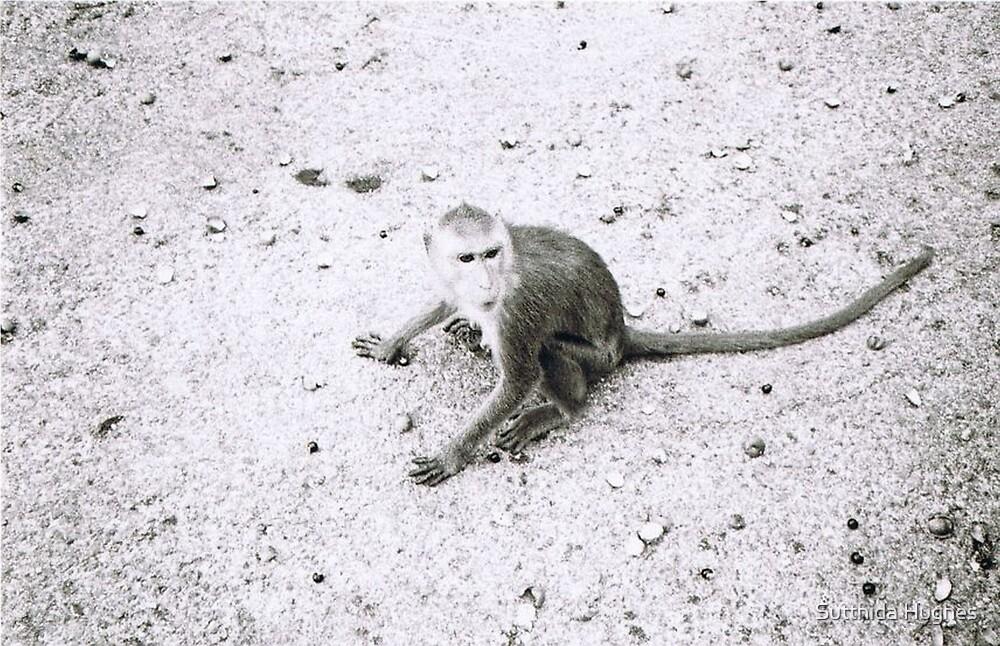 Monkey by Sutthida Hughes