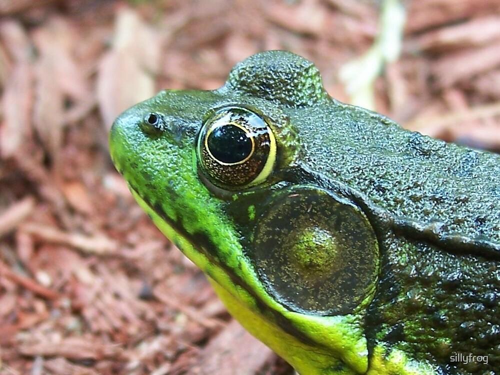 """Eye of Frog"" by sillyfrog"