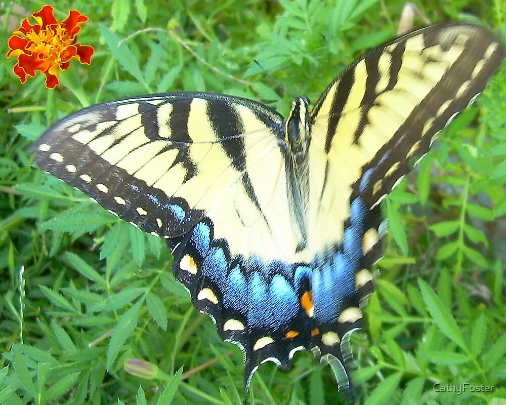 Yellow Butterfly by CathyFoster