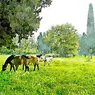 Horses and cows grazing by Giuseppe Cocco
