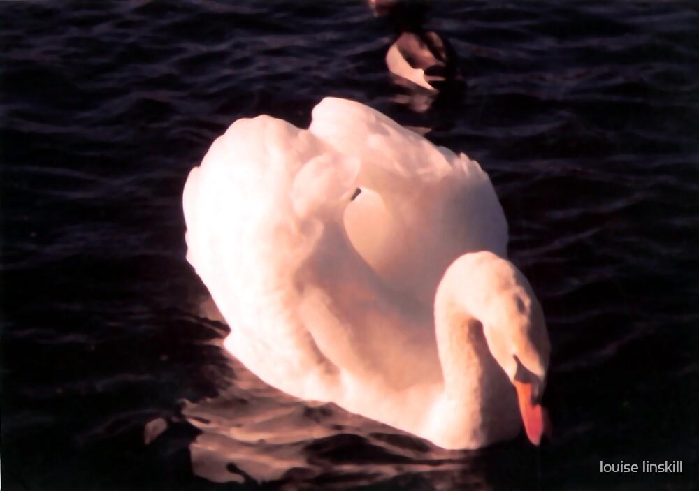 swan by louise linskill