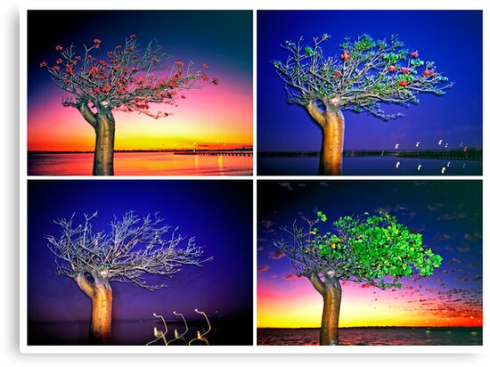 The Four Seasons by Mark Boyle