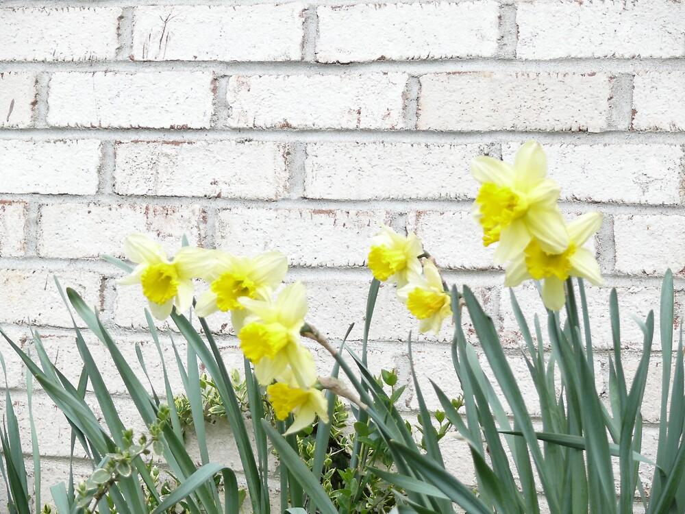 Spring Flowers by Nina Andrews