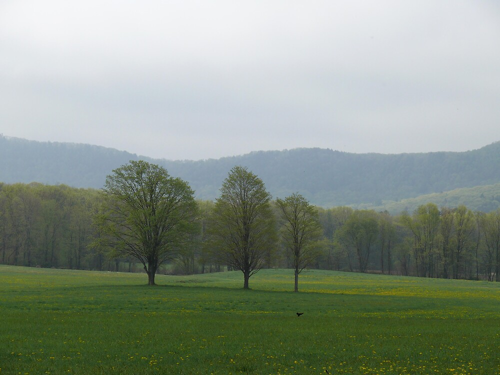 beautiful field with trees by Nina Andrews