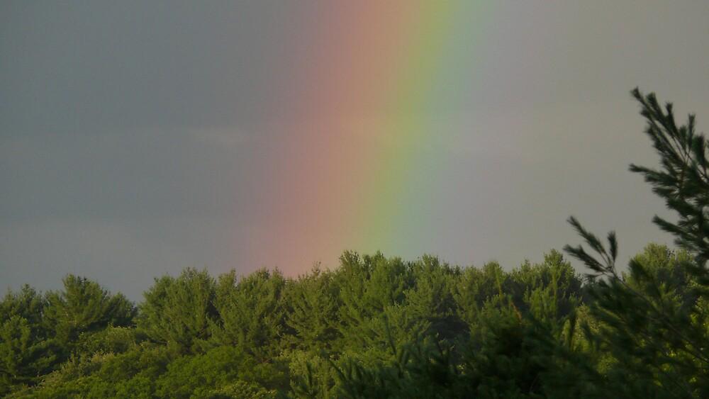 rainbow by Nina Andrews