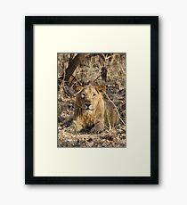 Gir Lion Framed Print