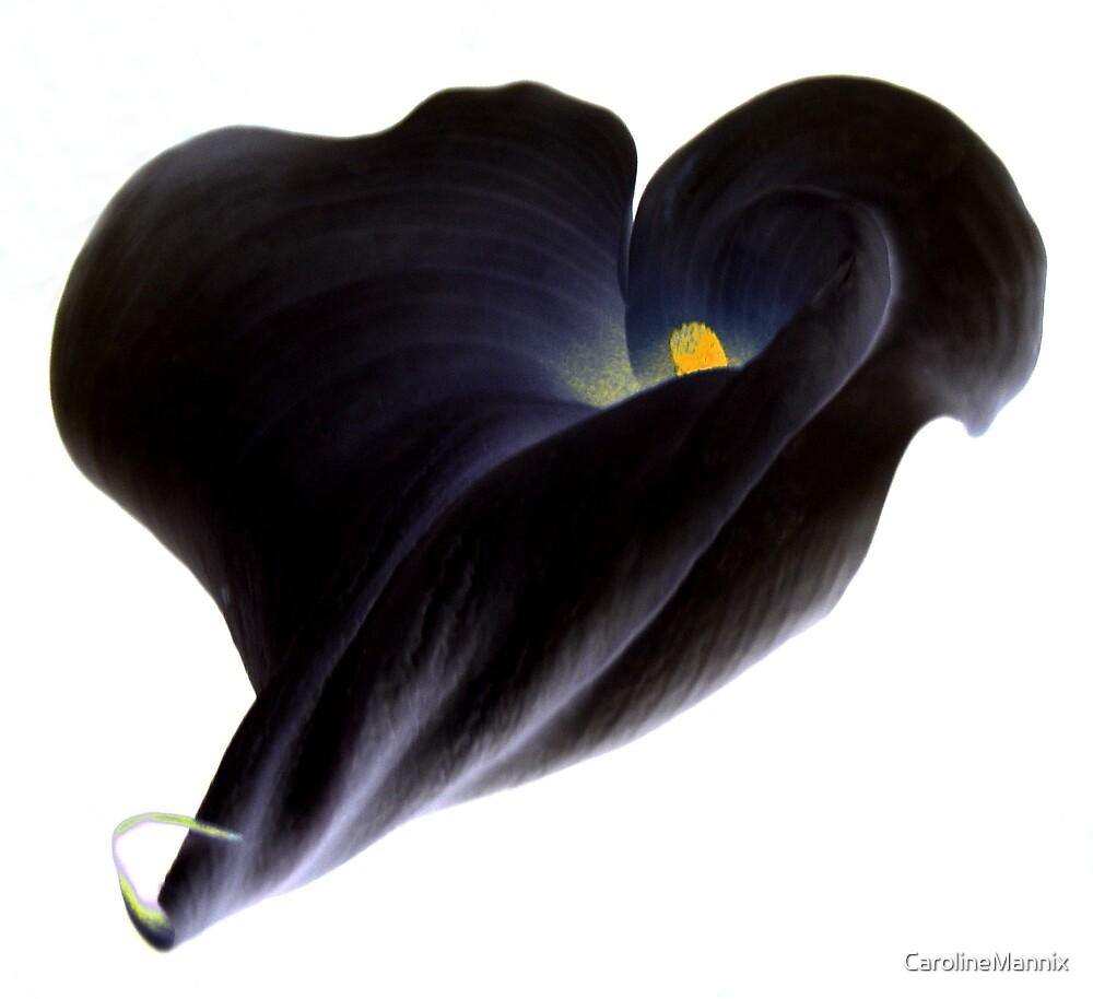 Black Lily by CarolineMannix