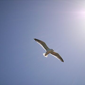 seagull by carpenter777