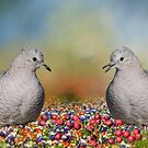 Inca Doves  by Bonnie T.  Barry