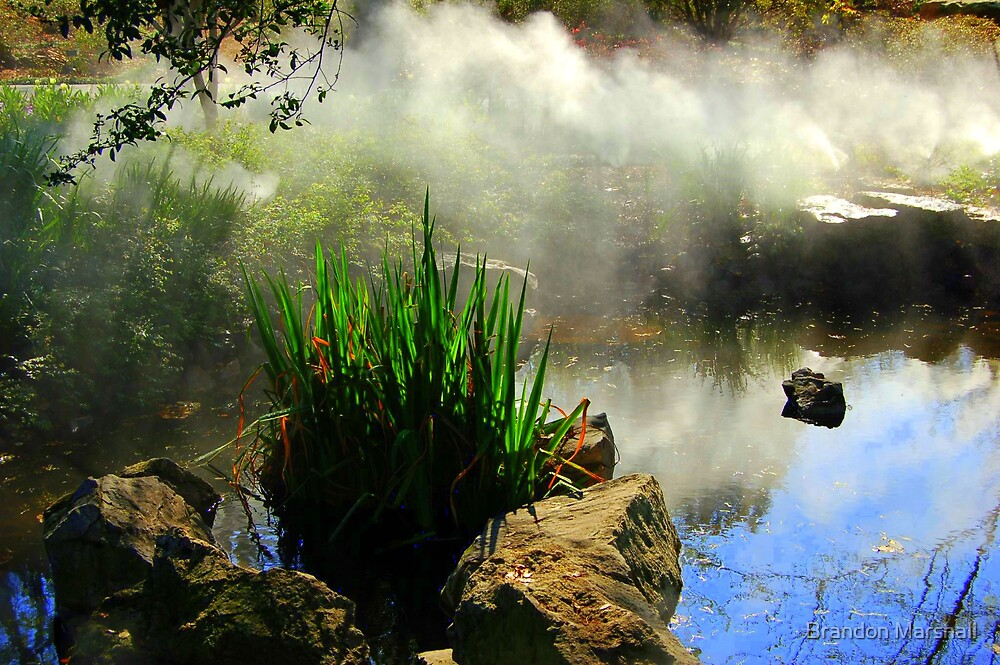 Steamy Rainforest by Brandon Marshall