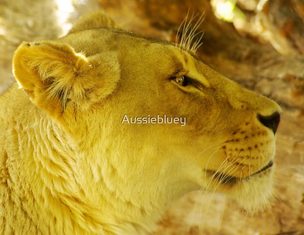 Lioness by Aussiebluey