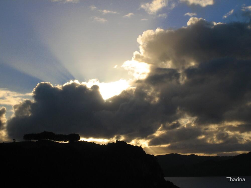 Morning glory by Tharina