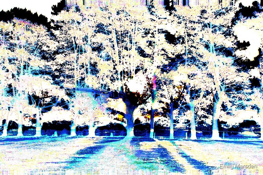 Winter by Emily Marsden
