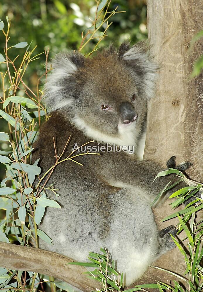 Koala. by Aussiebluey