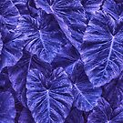 Passionate Purple Leaves by LouisaCatharine