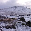 Ingleborough Residents by mikebov