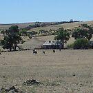 BEAUTIFUL AUSTRALIA by DENENE CHERISE MAXWELL