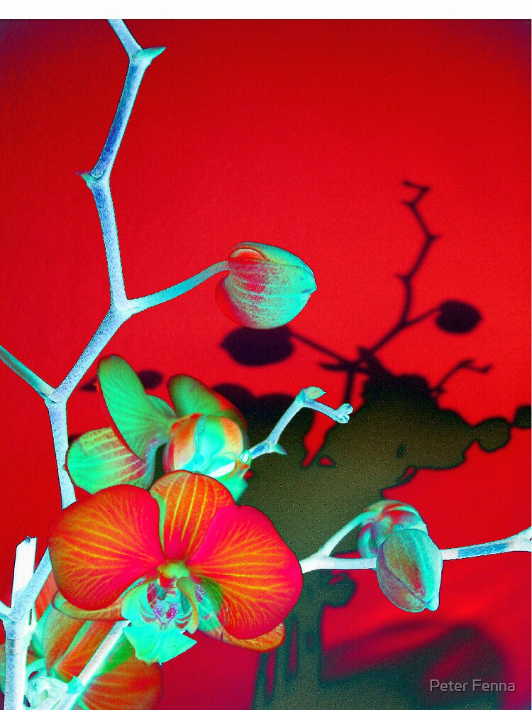 Orchid In Red by Peter Fenna
