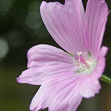 Lilac by djsnooty