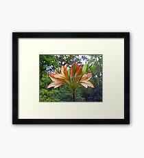 Rhododendron in Orange Framed Print