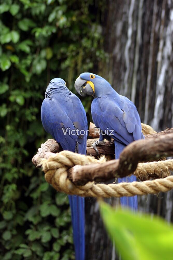 BIRDS AND WATERFALL by Victor  Ruiz