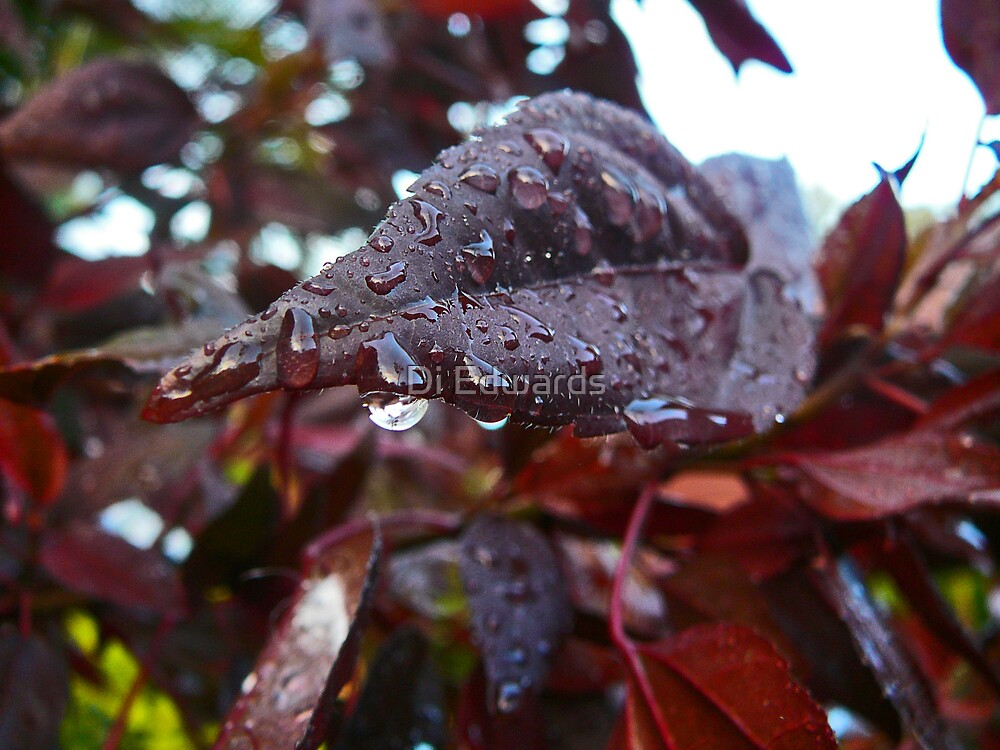 Droplets by Di Edwards