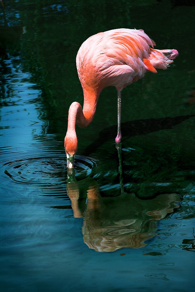 Flamingo by Moth