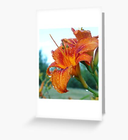 Bathing Beauty Lily Greeting Card