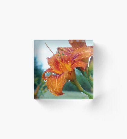 Bathing Beauty Lily Acrylic Block