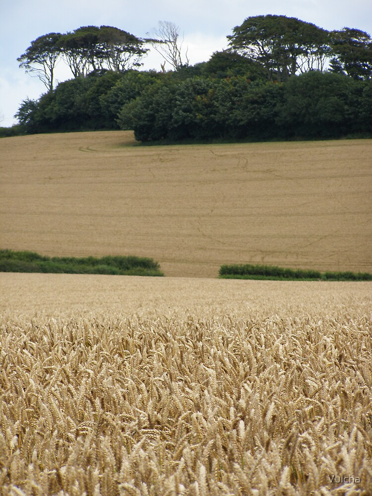 Corn Field. by Vulcha