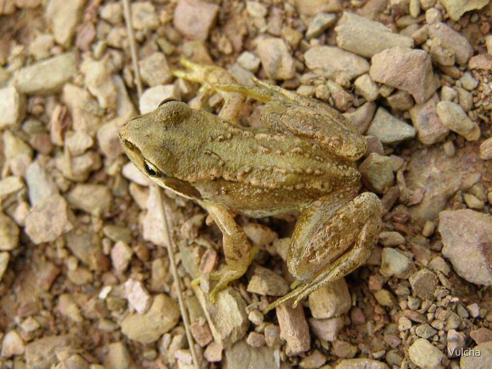 Frog. by Vulcha