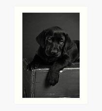 Jake's 7 week puppy Art Print