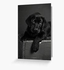 Jake's 7 week puppy Greeting Card