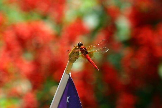 Patriotic Dragon by DARRIN ALDRIDGE